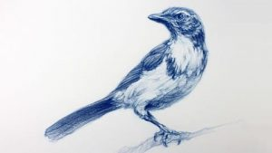 The Art & Science Of Drawing / BASIC SKILLS